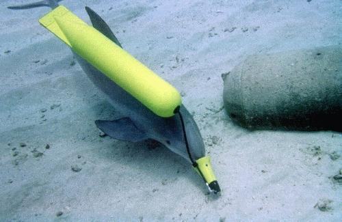 Delfinii din Marea Neagra, noua arma secreta a Kremlinului