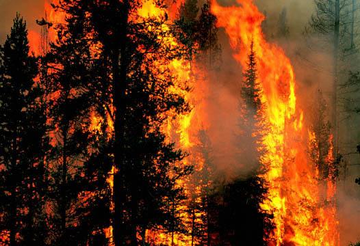Padurile israeliene, afectate de incendii de origine necunoscuta